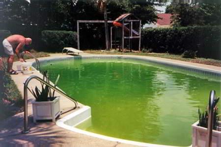 Zwemvijver Onderhoud Draadalgen Zweefalgen