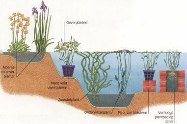Een vijver ontwerpen hoe ziet een goed vijverontwerp eruit for Filter voor vijver