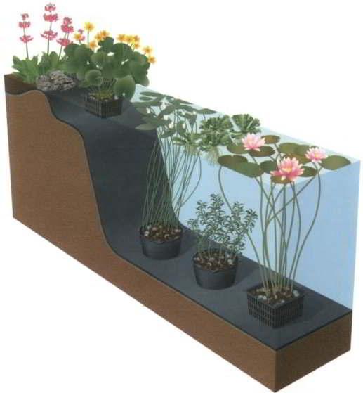 Waterplanten zuurstofplanten waterlelie moerasplanten for Natuurlijke vijver zonder pomp