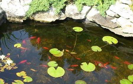 Onderhoud aan de vijver in het voorjaar vijveronderhoud for Vissen vijver